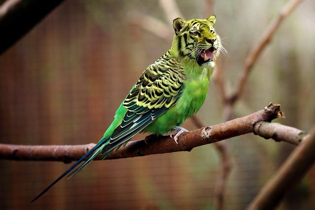 tygr papoušek